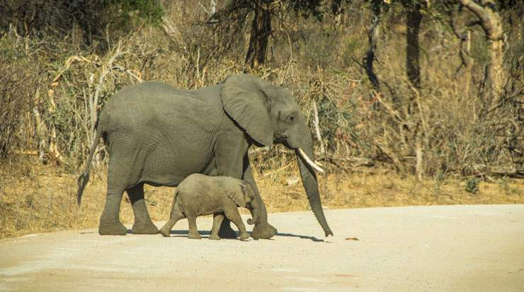 Namibia has dedicated government budget funds to fight poaching