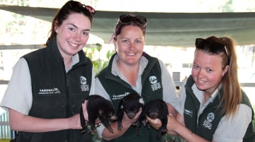 zookeepers with Tasmanian Devil joeys