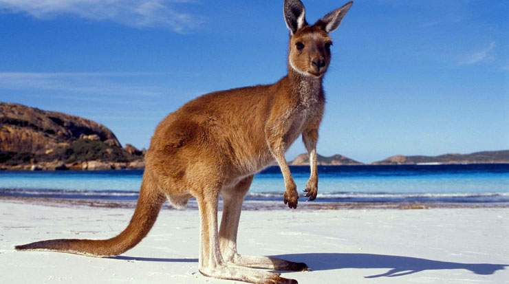 Travel agents have to complete five training modules to become a qualified Aussie Specialist