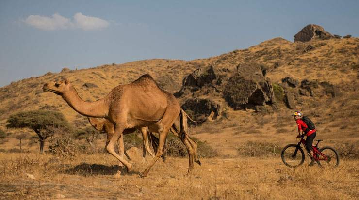 Wildhaber followed the footsteps of camels during his journey