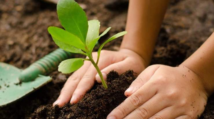5000 'Trees of Hope' to be Planted by Giovani Group, Cyprus